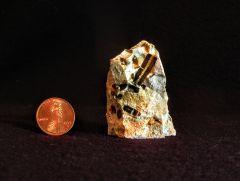 Crinoid Stem, Interior Mold
