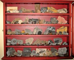 Fossil Cabinet.