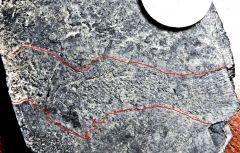 Faint imprint of coelacanth