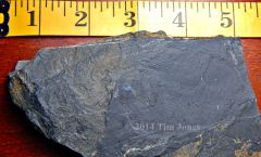 Partial Coelacanth