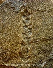 Plant imprint