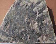 lobifolia dejerseyi Retallack, 1977.Middle Triassic.Nymboida Coal Measures.Basin Creek Formation.Farquahars (coal) seam.Nymboida.New Soth Wales. Australia.