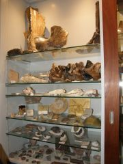 Fossil Collection 2015 Left Shelf Overview
