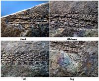 fossilcrazy 2.jpg