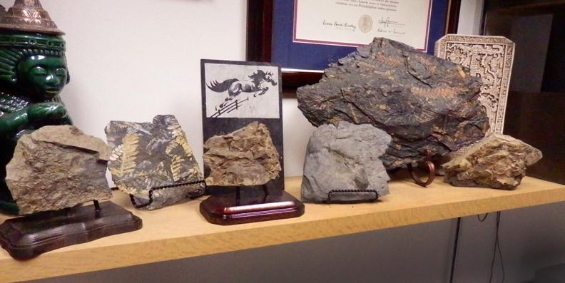 Ideas For Displaying Fossils General Fossil Discussion