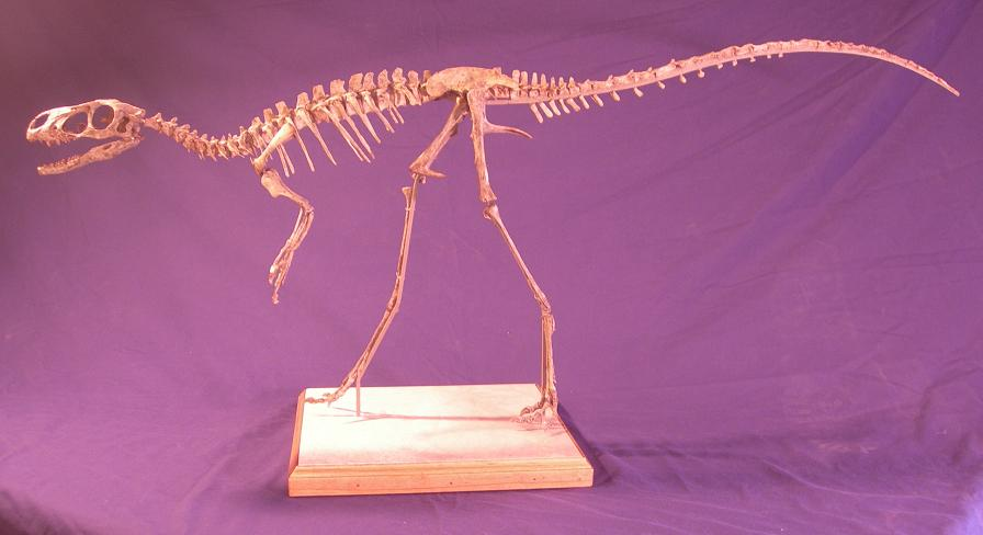 Resultado de imagen para dilong fossil