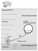 Floating_Scyphocrinites.gif