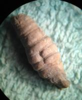 2695-crinoid-stem-pit.jpg