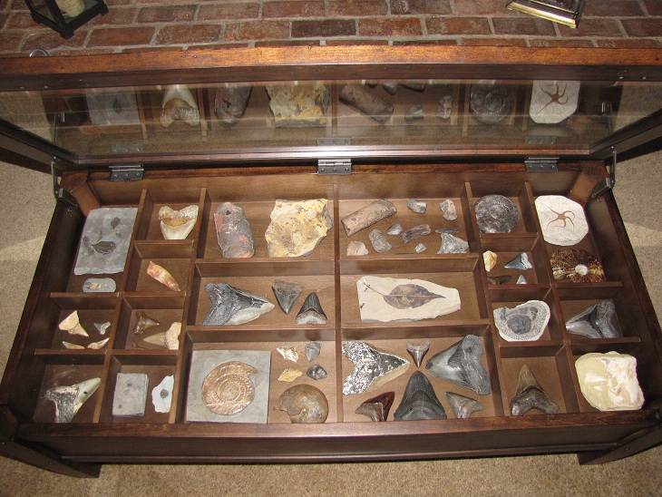 Coffee Table Display Case Member Collections The Fossil Forum