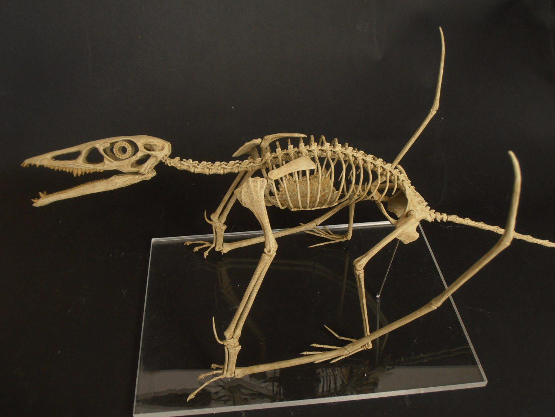 10 Animales prehistoricos que habitaron la tierra P.2
