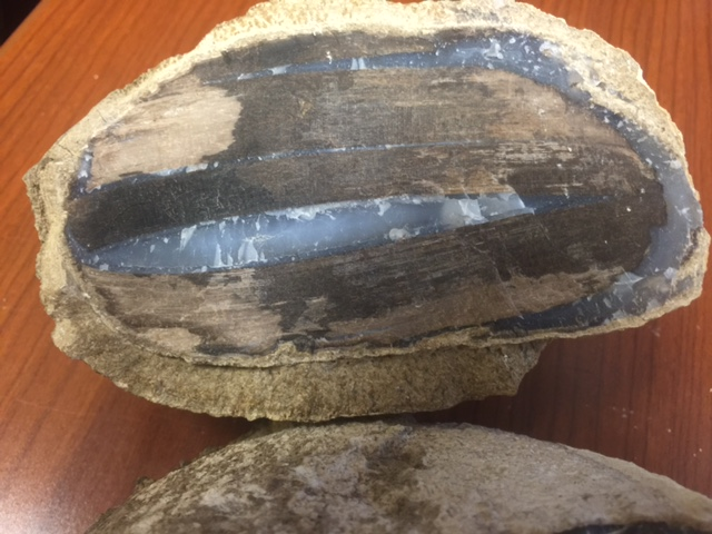 Blue Forest Eden Valley Wyoming Petrified Wood Fossil
