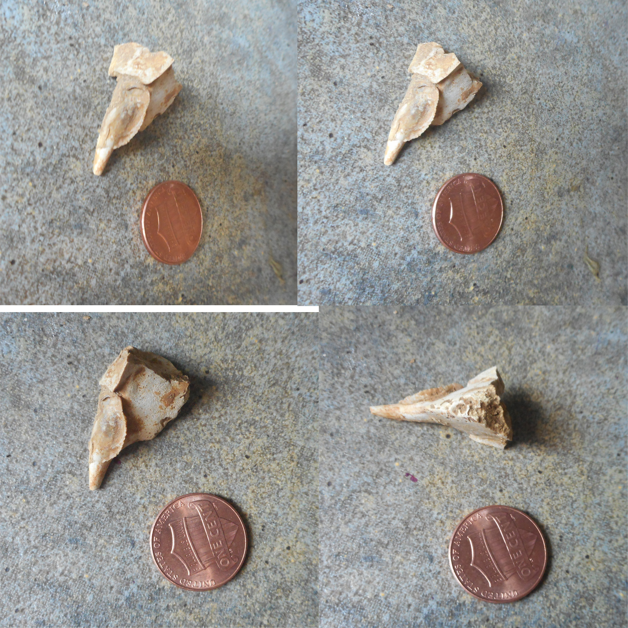 help id these central texas cretaceous eocene unknowns fossil id