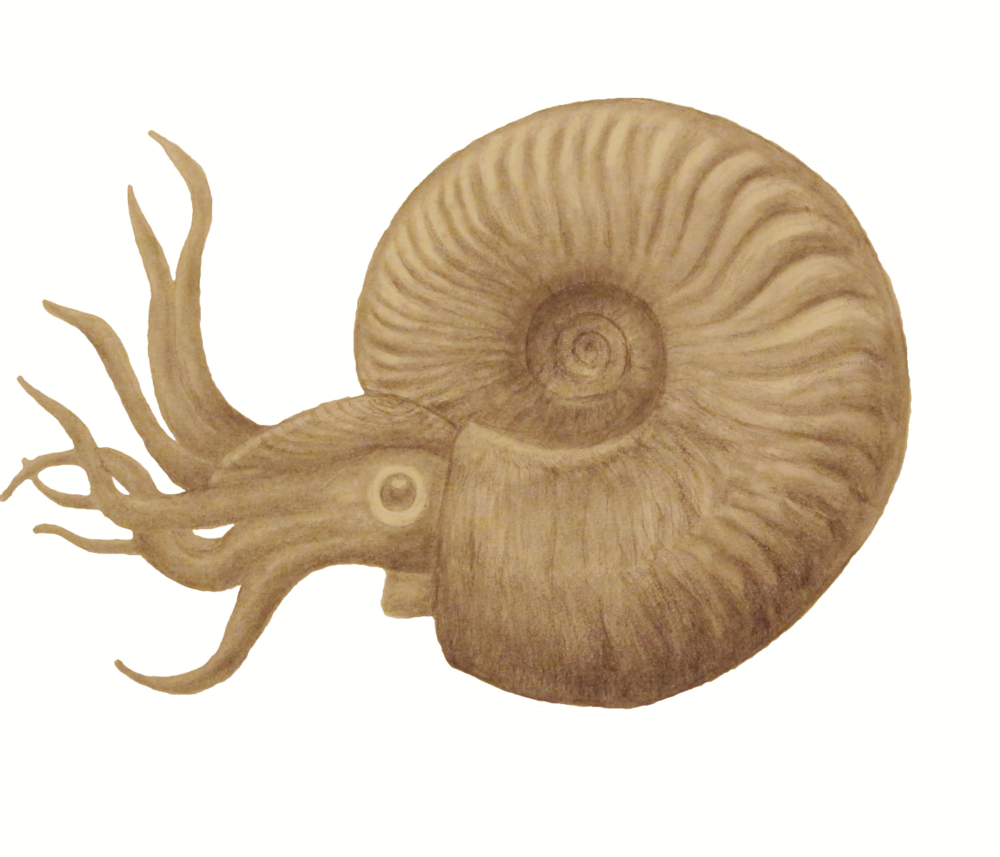 how to draw a fossil