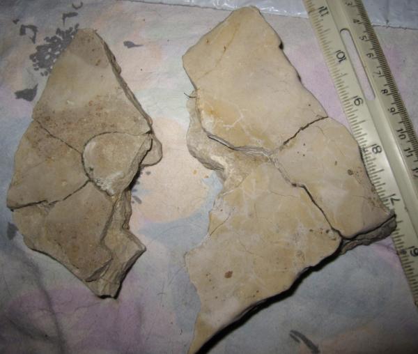 Fossil Identification Site – Jerusalem House