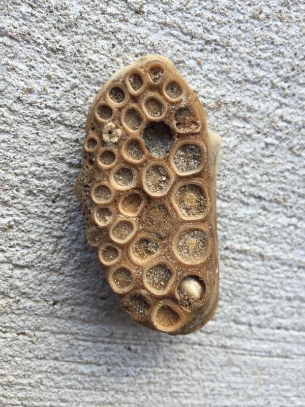 Texas dike Strange Bone Identification - Fossil ID - The Fossil Forum