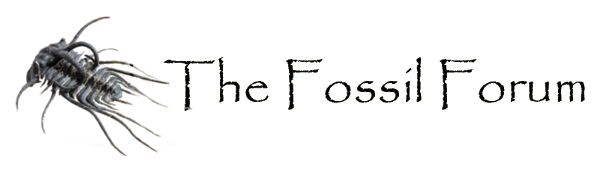 The Fossil Forum