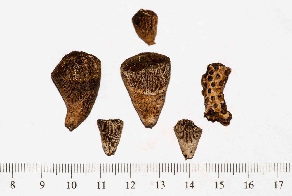 Eocene Corals FF 001.jpg