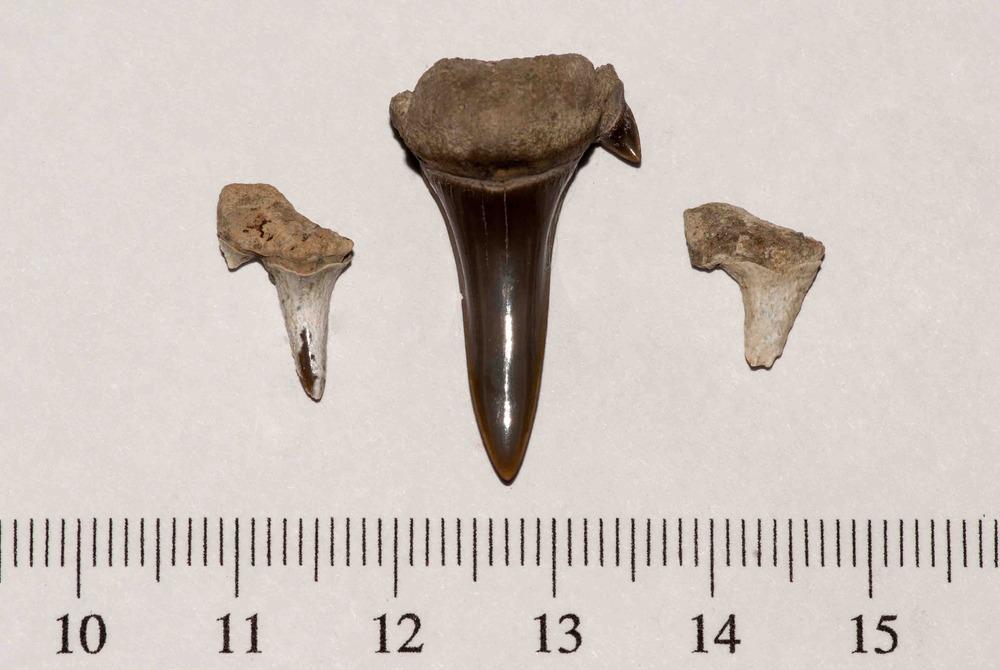 Waco Shark Teeth FF 001.jpg