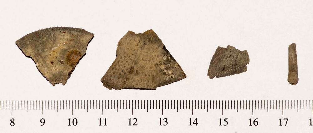 Urchin Pieces and Spine FF 001.jpg
