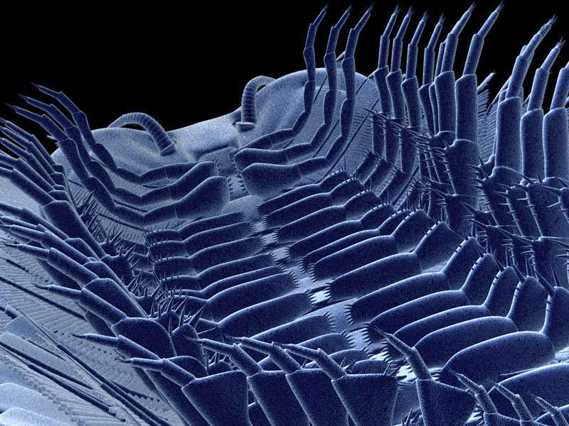 Triarthrus-face-ventrale7.jpg