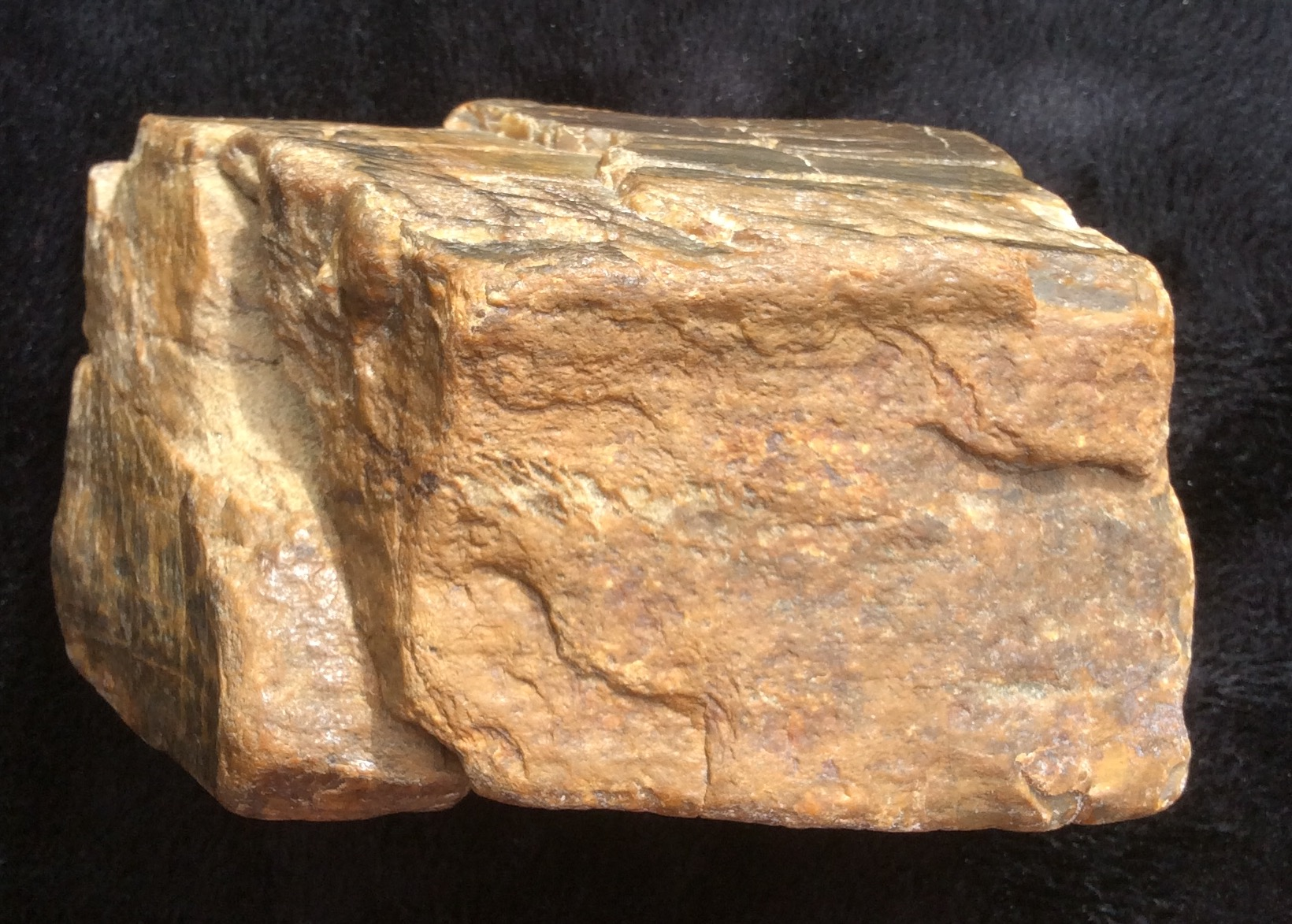 Petrified Wood Bone Fragments Identification Fossil Id