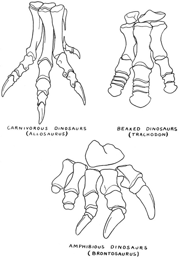 dinosaur feet coloring pages - possible dino foot fossil fossil id the fossil forum