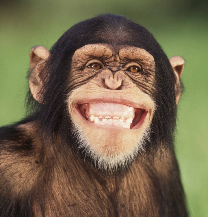 monkey_crop_headshot_web.jpg
