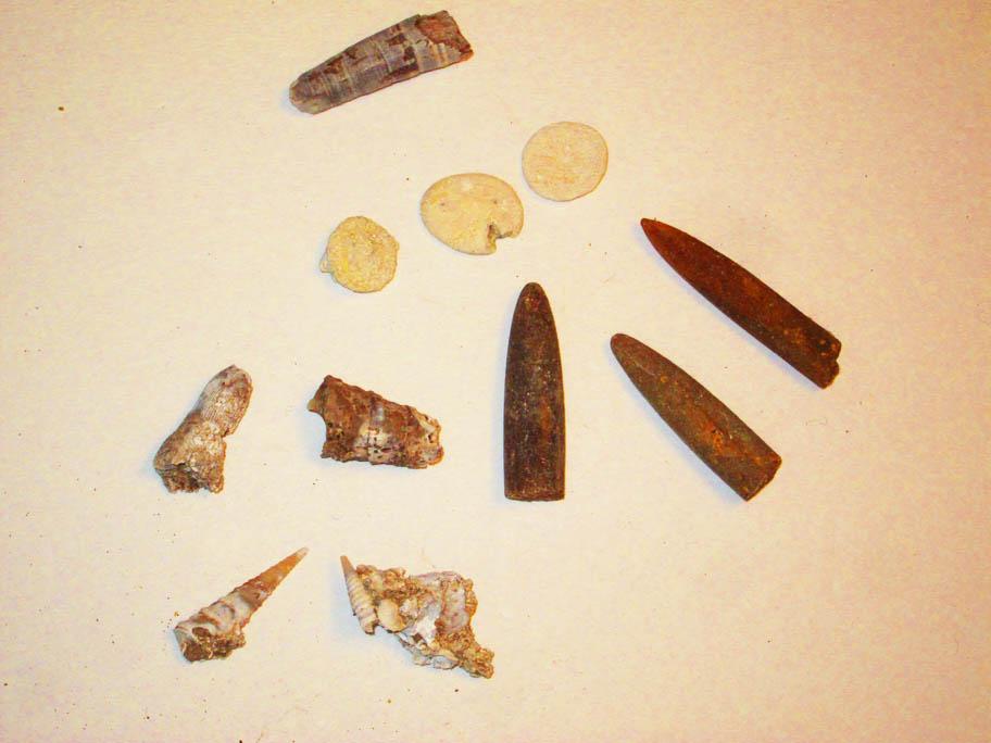 SS echinoids whale belemnites shells.jpg