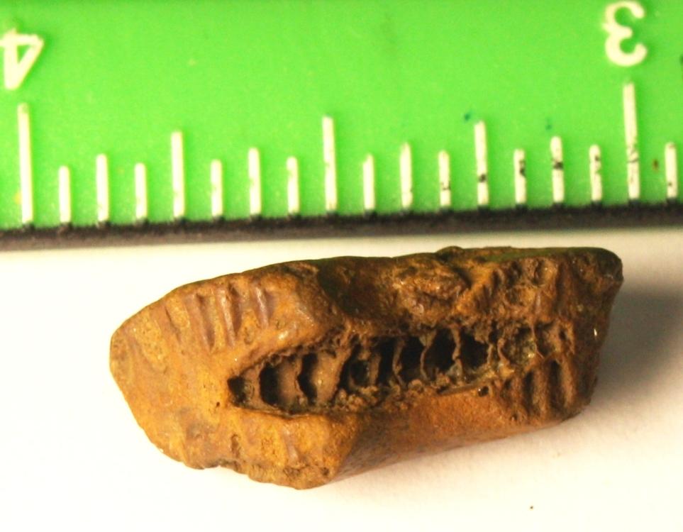 Fossils 004.JPG