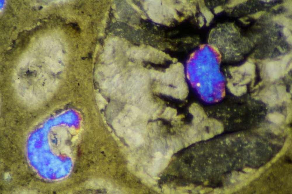 Kyanite-ZX-4-2491.jpg