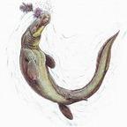 Prognathodon saturator 101