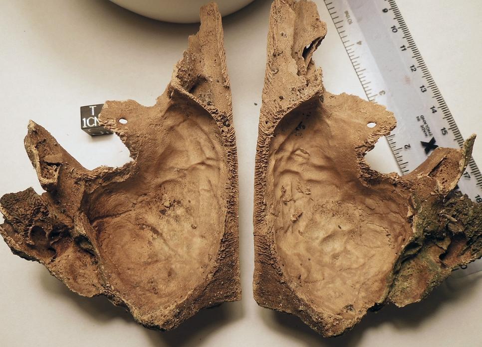 skull-inside-1.jpg