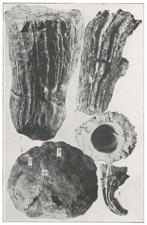 Plate VII.jpg