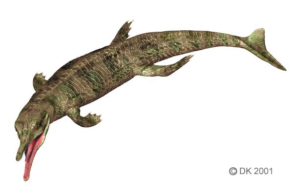 Metriorhynchus1.jpg