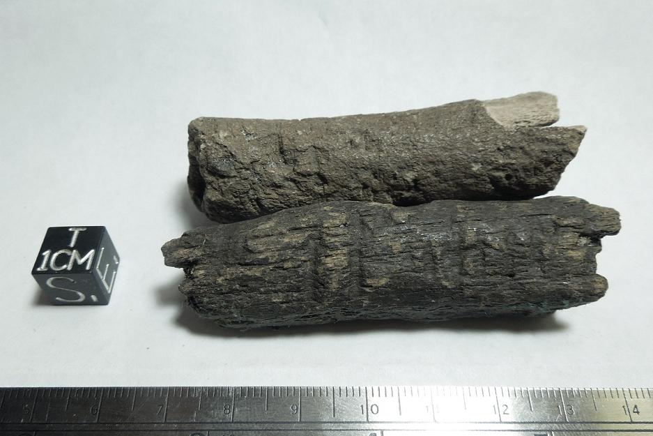 bones-pred-1.jpg
