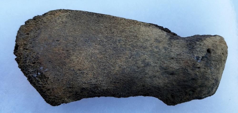 2-19-17 Arm bone.4 - Copy.jpg