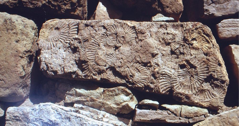 Ammonites San Pedro de Parish Peru PH PO Combelles.JPG