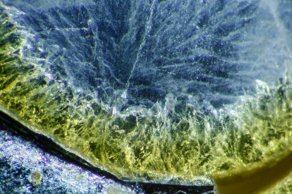ChamberedAmmonite-FS70-Z3-DF_3471.thumb.jpg.ef7ebcbe383f259cc70221fc98f53d03.jpg