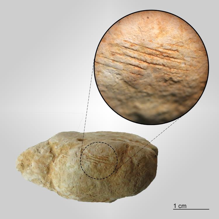 Marine-Coprolite-Niobrara-Formation-Tooth-Marks.jpg