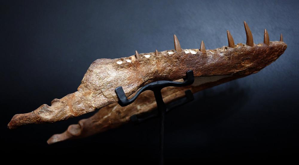 Plesiosaur-3.thumb.jpg.69bd5d52b255952c6c907f682f6f477a.jpg