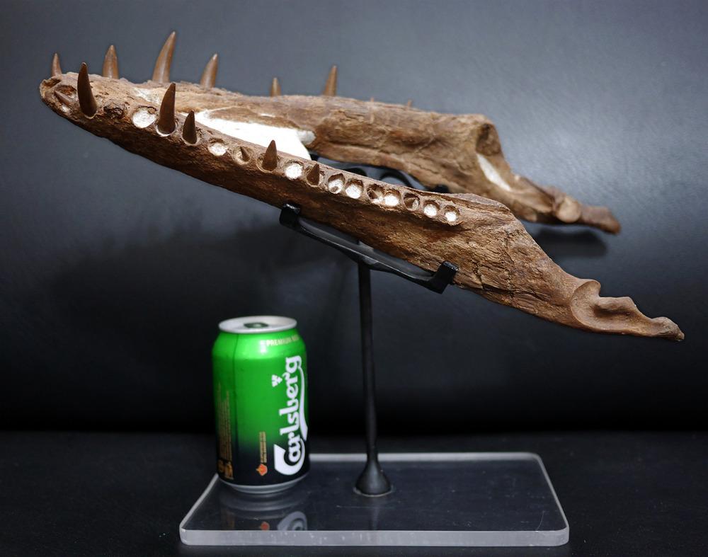 Plesiosaur-6.thumb.jpg.60787be536ff209d9f44513cffb986e8.jpg