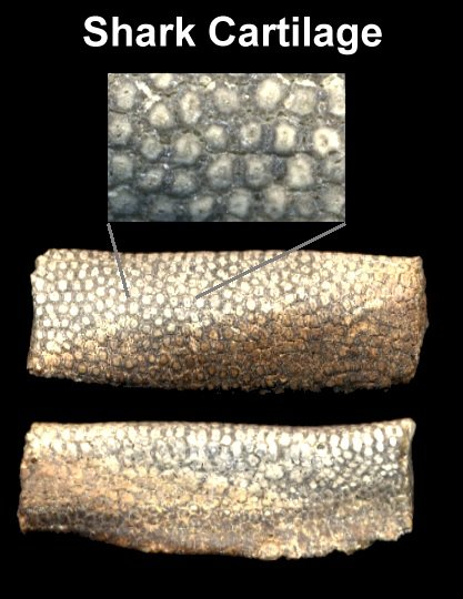 fossil_shark_cartilage_zoomed_in.jpg