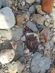 Cretaceous Sea Turtle Shell