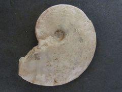 Trimarginites trimarginatus (Oppel 1863)