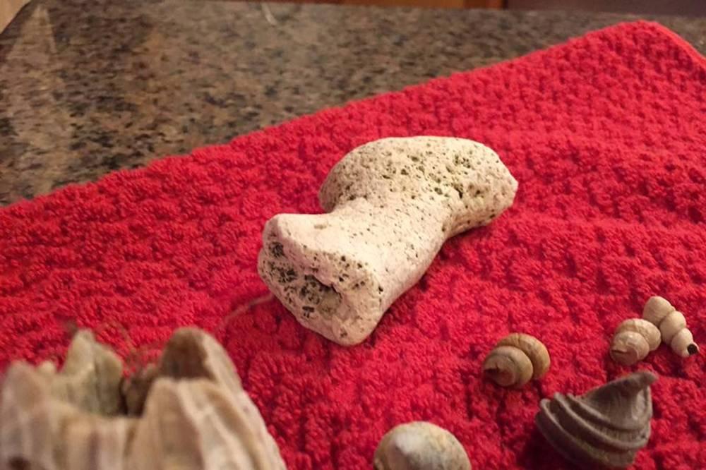 Bone or coral 1 32017.jpg