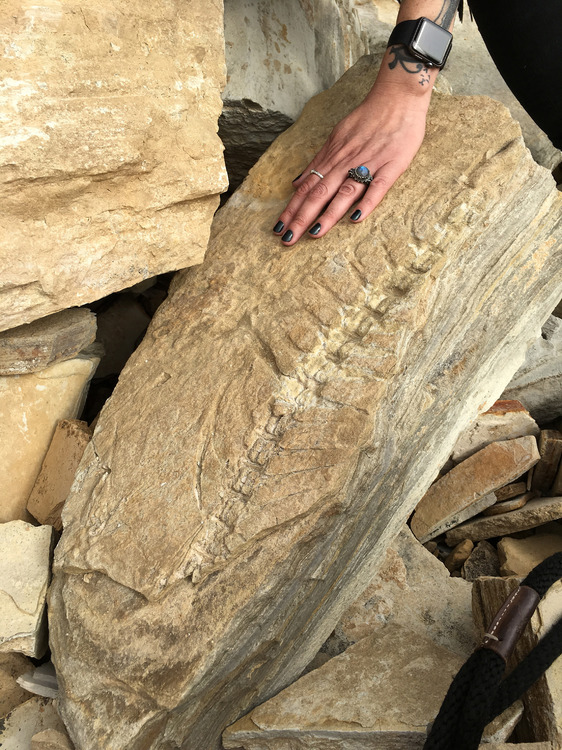 fossil resize 7903.jpg
