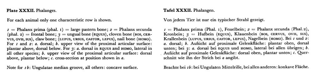 Phalanges_text.thumb.jpg.6416e6ee9966d8e75672edf94df2c21b.jpg