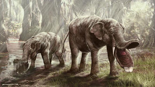 Platybelodon.jpg.7f2d15f73d4330dafe6c800ecae50427.jpg