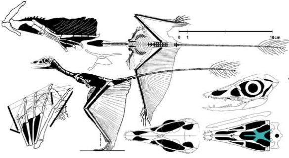 sharovipteryx.jpg