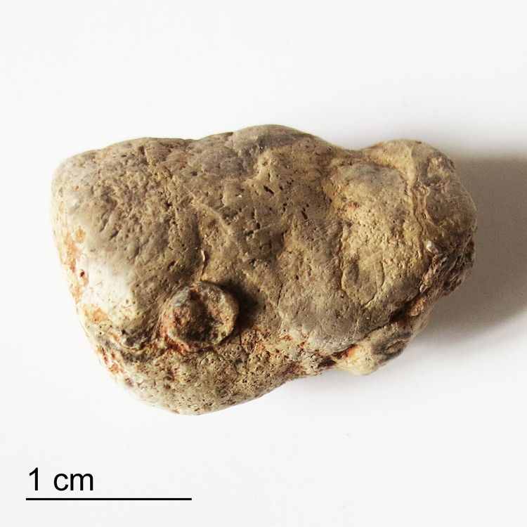 Coprolite-Protrusion-Bull-Canyon-Formation-NM-Top-Before.jpg